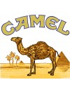 Camel (10)